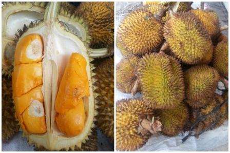 Elai, mirip banget sama Durian, beda bau dan beda rasa